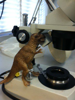 T Rex in Diamond Grading Lab by EmilyWiserJewelry2011