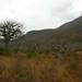 Floresta de Baobabs