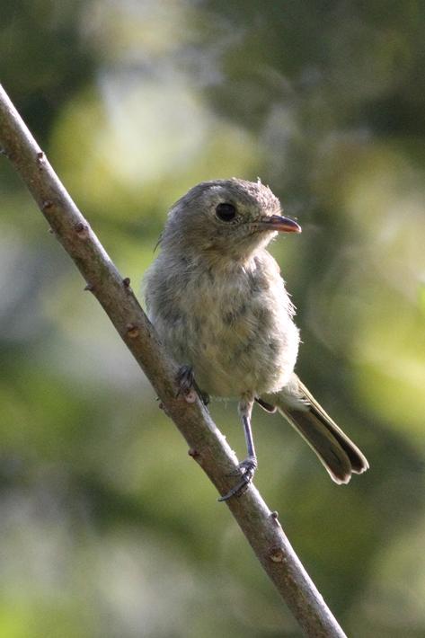 072311_yellowbird01