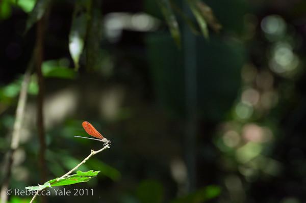 RYALE_Amazon-181