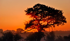 Blazing Rays (fidget65) Tags: morning light mist cold tree colors silhouette dawn oak shropshire rays atcham