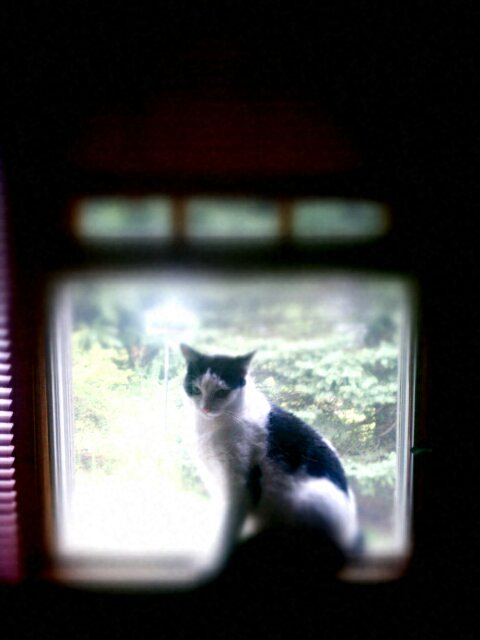 phone photography: the window cat