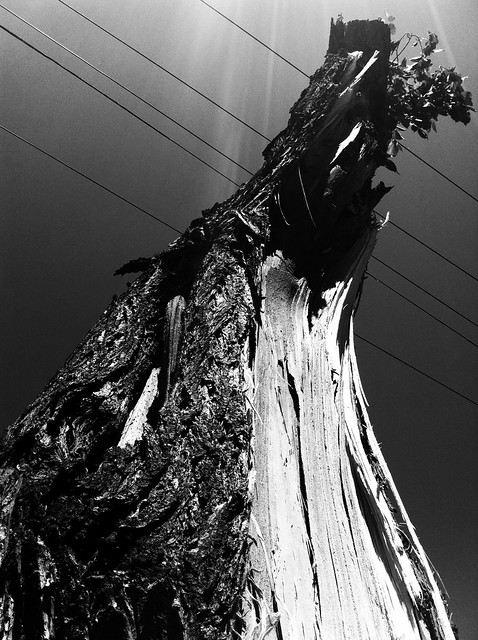 post-storm tree
