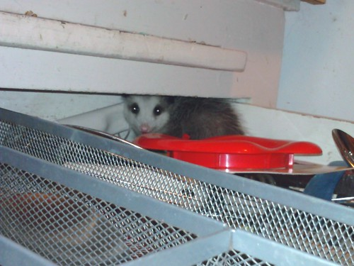1possum pat manning antioch