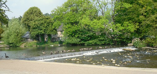Geese on weir in Bakewell