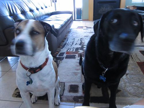 Stewie & Mac
