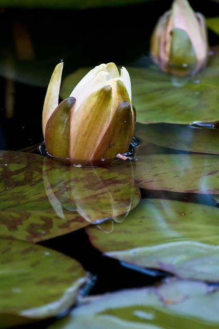 IMAGE: http://farm7.static.flickr.com/6027/6000557845_1339d20f93_z.jpg