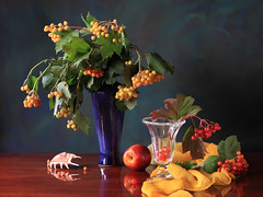 Kalynka Jazz (panga_ua) Tags: blue light red summer stilllife green leaves sunshine yellow composition scarf canon reflections lights berry ceramics berries shadows dof availablelight details curves shapes peach ukraine pastels vase seashell sheen arrangement tabletop gettyimages bodegon artisticphotography naturamorta artphotography viburnumopulus kalyna snowballtree guelderrose europeancranberrybush kalynka footedbowl crampbark kalinkamalinka polishedsurface waterelder nataliepanga stunningphotogpin kalynkajazz