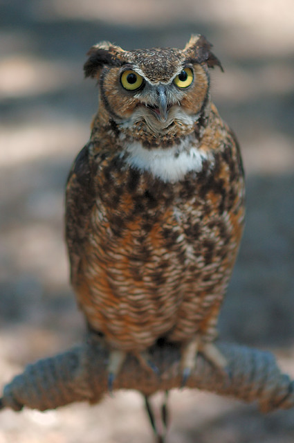 Owl at Bird Sanctuary