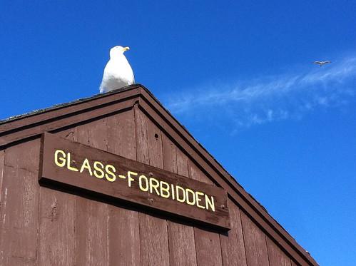 Glass – Forbidden