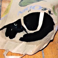 1995 DE ZAKKEN VAN ODIN ZIJN DE BESTE, ZEGT SJIM //  THE BEST BAG (Anne-Miek Bibbe) Tags: cats cat katten kat chat nederland gato katze gatto poes 2011 bibber bibbe annemiekbibbe
