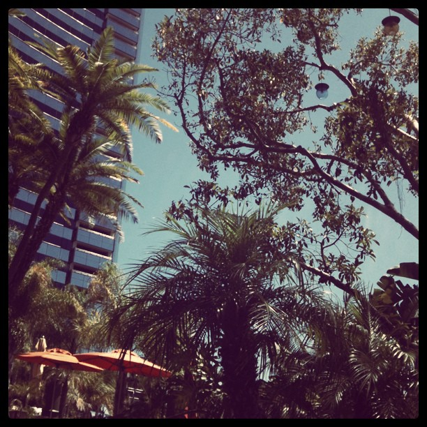 The view up ...from the pool #BlogHer11 earlier today