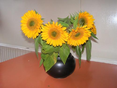 zonnebloemen van marion