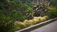 Storm (Max Braun) Tags: sanfrancisco california plants usa storm motion green grass stone fence wind path noctilux lush bushes tagebild