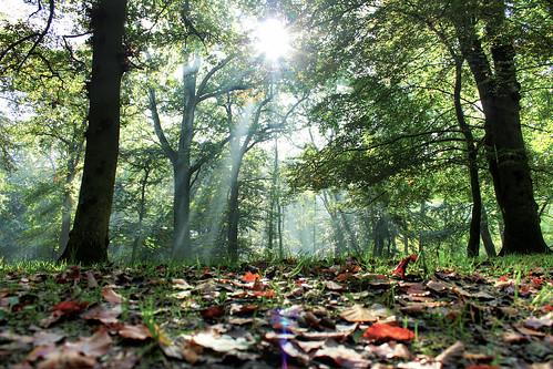 [フリー画像] 自然・風景, 森林, 樹木, 日光・太陽光線, デンマーク, HDR, 201110041700