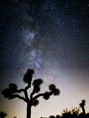 Milky Way Joshua Tree (defiantGTI) Tags: park tree way joshua national milky