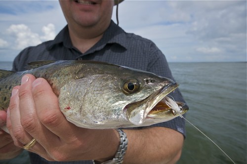 speckled trout2