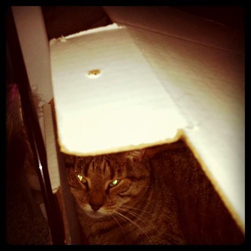 Beast in a Box!