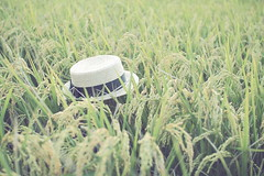 稻香 (Huzi Li) Tags: portrait 外拍 a16 稻穗 稻子 tamron1750mmf28 稻香 eos7d 捷運忠義站 結穗