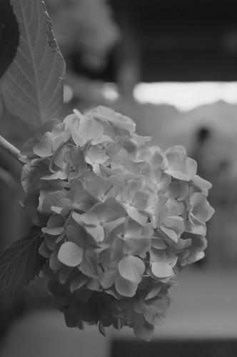 2011.07.13(R0012873_50mm_Silver Efex