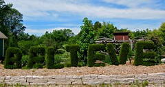 Hedge wisdom (NCM3) Tags: wisconsin garden topiary message letters believe hedge wisdom mulch