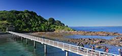 Tiritiri Matangi's pier Photo