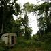 Acampamento na floresta