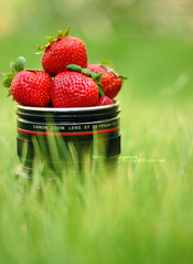 (Fahda Al-Mugairen ) Tags: red green grass canon lens strawberry mug 550d fahda almugairen
