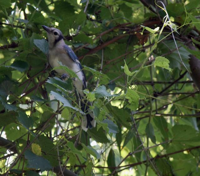 anotherbird
