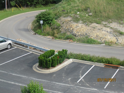 7/15/11: Wheeling, West Virginia is quiet.