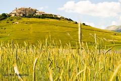 Castelluccio (nuanda1979) Tags: sun verde green beautiful alberi tramonto picture erba cielo sole fiore montagna umbria papaveri tulipano pianura emozioni castelluccio fieno bellissima sentimento mozzafiato