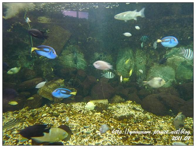 110711小丑魚主題館 (5)