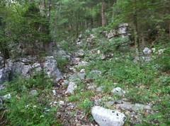 Hogjowl Trail