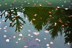 Pooling (ifoto.cl) Tags: chile photography fotografia thok thokrates