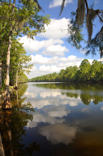 07/19/11 Caddo Lake by roswellsgirl