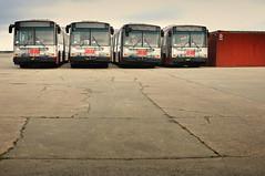 Muni Buses (Euan Slorach) Tags: bus muni alameda alamedanavalcomplex