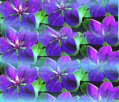 Clematis Pattern (Posterized) by randubnick