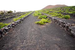 Lanzarote, Canary Islands - La Geria - Vineyards (George K) Tags: lanzarote photodomino vineyards canaryislands islascanarias photodomino857