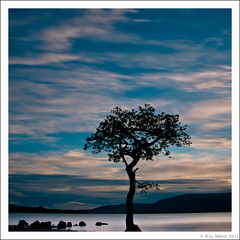 The tree ~ colour (w.mekwi photography [on the road]) Tags: scotland lochlomond nikond90 milarrochybay wmekwiphotography