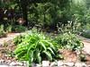 Comfrey-Corsaro Garden