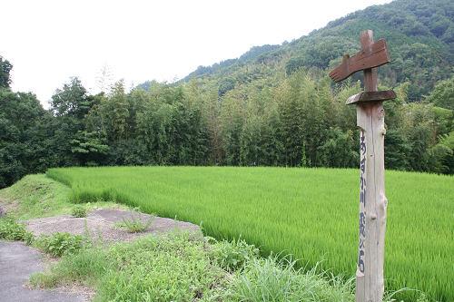 飛鳥川の飛び石(石橋)@明日香村-14