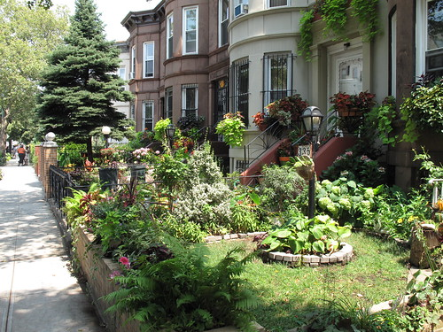 Greenest Block in Brooklyn 2011