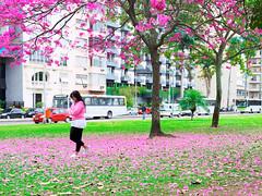 Woman In Pink (Leonardo Martins) Tags: pink brazil woman tree verde green nature beauty grass rio brasil riodejaneiro wonderful lumix bresil mulher rosa brasilien panasonic lindo exotic grama ipê tropical g2 praça beleza árvore ipe flamengo brésil belo magia mágica