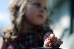 Through the Eyes of a Child (Truebritgal) Tags: portrait sky flower up closeup holding nikon focus toddler soft dof child close bokeh outdoor blueeyes fingers young sunny highlights lilac softfocus dreamy nikkor 50mmf18 d7000 truebritgal