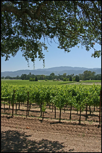 5991123350 f7a9a63794 z Carte Postale : Napa Valley   San Francisco
