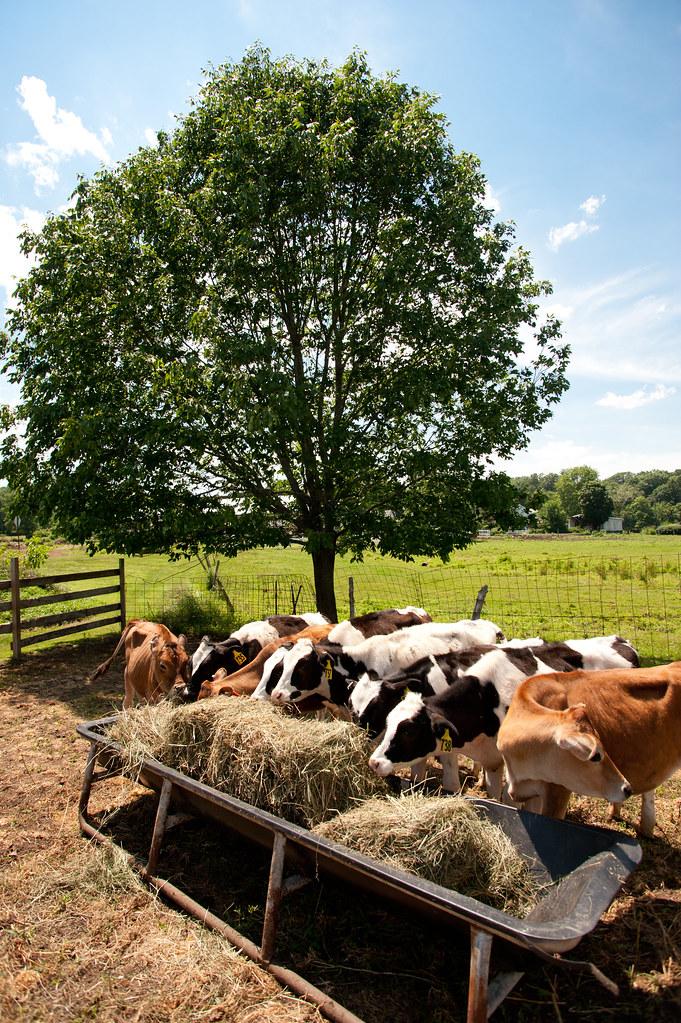 Fletcher Farm, Southampton, MA