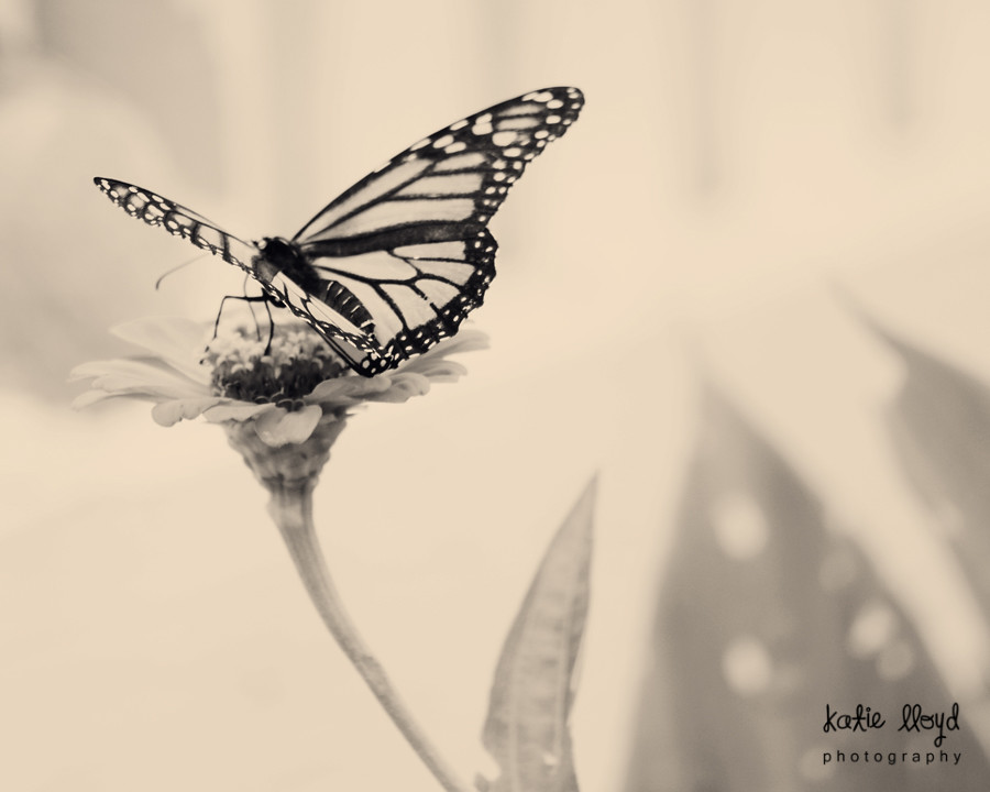 butterfly-in-bw-2---8x10