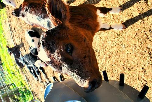 NZ_farm_7