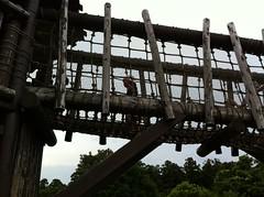以前は手を引いても怖がって足を踏み出さなかった縄の橋。今日は自分から進んで渡り切りました