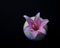 (A.C.Thamer) Tags: blur flower love beauty composition mom dof bokeh flor canon40d acthamer mamiya55mm14